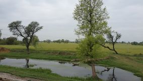 Aterre o scap, papel de parede, árvores, água, natureza Foto de Stock