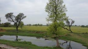 Aterrice el scap, papel pintado, árboles, agua, naturaleza Foto de archivo