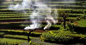 Aterrice la purificación del avattavada, Kerala munnar, verde foto de archivo libre de regalías