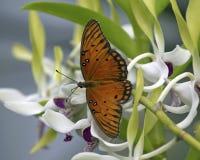 Aterrissagem da orquídea Foto de Stock Royalty Free