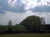 Aterrizaje del abedul al borde de un campo en primavera Foto de archivo