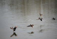 Aterrizaje del agua Imagen de archivo libre de regalías