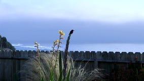 Aterrizaje y sentada del colibrí en la planta con el océano almacen de video