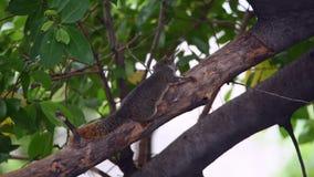Atesore el color marrón en un árbol en la naturaleza salvaje metrajes