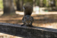 Atesore el día del otoño en los parques nacionales de los E.E.U.U. Imagenes de archivo