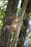 Atesore en un árbol 2. Imagenes de archivo