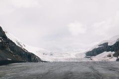 Athabasca冰川视图 免版税图库摄影
