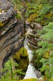 Athabasca在贾斯珀国家公园下跌 免版税图库摄影
