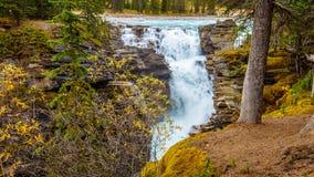 Athabasca在贾斯珀国家公园下跌 库存照片