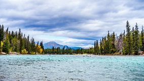 Athabasca河和旋涡河的会议在贾斯珀国家公园 免版税库存照片