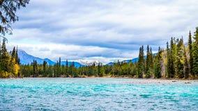 Athabasca河和旋涡河的会议在贾斯珀国家公园 免版税库存图片