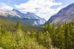 athabasca河视图西部加拿大 免版税库存图片