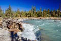 Athabasca秋天, Icefield大路,贾斯珀国家公园 免版税图库摄影
