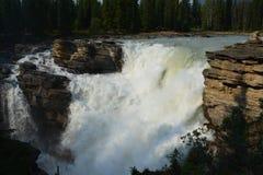 Athabasca cai Canadá foto de stock royalty free