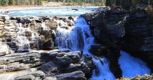 Athabasca cai em Jasper National Park 4K video estoque