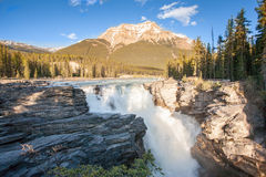 Athabasca faller i Jasper Arkivbilder