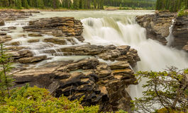 Athabasca faller i Jasper Royaltyfri Foto