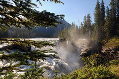 Athabasca Falls. Morning sunlit Athabasca Falls in Alberta, Canada surrounded by greenery stock photo
