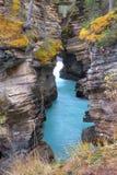 Athabasca Falls canyon Royalty Free Stock Photos