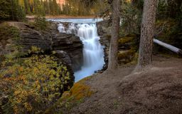 Athabasca Falls in Jasper Stock Image