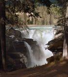 Athabasca Falls, Jasper, Alberta, Canada Royalty Free Stock Images