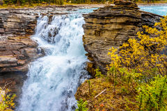 Athabasca Falls. In Jasper National Park in the Canadian Rockis royalty free stock images