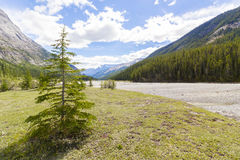 Athabasca flodsikt västra Kanada brittiska columbia Arkivbilder