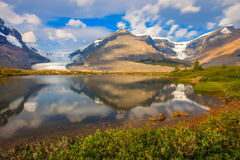 Athabasca Glacier Jasper National Park. Along the Icefields Parkway at the Athabasca Glacier royalty free stock image