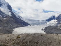 Athabasca lodowiec przy Columbia icefield japser parkiem narodowym Obraz Royalty Free