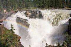 Athabasca nedgång, Jasper National Park Royaltyfri Foto