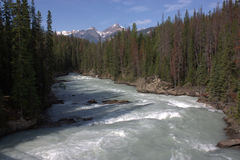 Athabasca River. In the Rocky mountains in Jasper National Park, Alberta, Canada stock image
