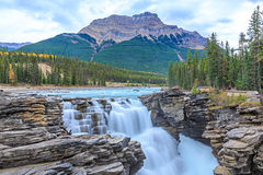 Athabasca River Falls,. Athabasca River Waterfalls in Jasper National Park, Alberta, Canada royalty free stock photo
