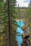 Athabasca River Falls, Royalty Free Stock Image