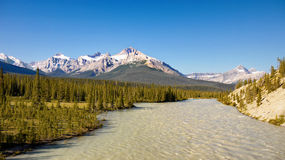 Athabasca River Jasper NP Canada Royalty Free Stock Image