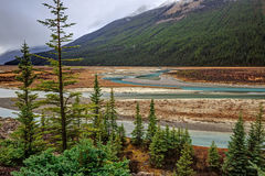 Athabasca River with low water level Stock Image