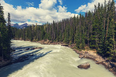 Athabasca river. Scenic views of the Athabasca River ,Jasper National Park, Alberta, Canada royalty free stock image