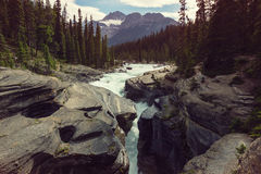 Athabasca river. Scenic views of the Athabasca River, Jasper National Park, Alberta, Canada stock images