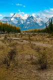 Athabasca Riverbank Fotografia Royalty Free