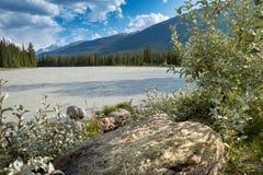 Athabasca rzeka w Kanada Zdjęcia Stock