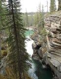 Athabasca Schlucht Lizenzfreie Stockbilder
