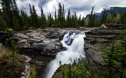 Athabasca tombe dans Alberta, Canada Photographie stock