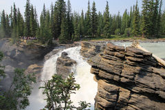 Athabasca Waterfall Royalty Free Stock Image