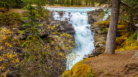 Athabascadalingen van Jasper National Park Stock Foto