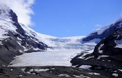 Athabaska Gletscher. stockbild