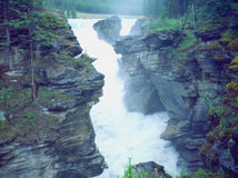 Athabaska River Falls, Rockies, Alberta Canada. Royalty Free Stock Images