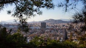 Athene door de takken van sparren Royalty-vrije Stock Foto