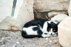 Athenian cat Royalty Free Stock Photos