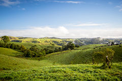 Atherton Tablelands on a Misty Morning Stock Photography