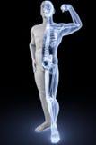 Athlète sous des rayons X Images stock