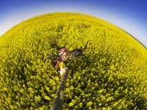 Athlete cyclist on a golden field Stock Photos